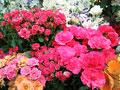お花イメージ